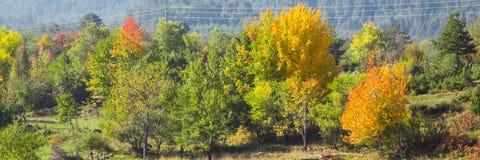 Δονούμενο υπόβαθρο πανοράματος φθινοπώρου με τα ζωηρόχρωμα πράσινα, κόκκινα και κίτρινα δέντρα Στοκ εικόνα με δικαίωμα ελεύθερης χρήσης