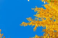 Δονούμενο φύλλωμα πτώσης Στοκ εικόνες με δικαίωμα ελεύθερης χρήσης