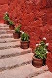 Δοχεία λουλουδιών στη σκάλα Στοκ Φωτογραφίες