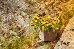Δοχεία με τα ζωηρόχρωμα λουλούδια, τη βοτανική και τη floral ομορφιά Στοκ Εικόνα