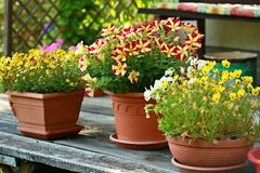 Δοχεία με τα ζωηρόχρωμα λουλούδια σε έναν κήπο Στοκ εικόνα με δικαίωμα ελεύθερης χρήσης