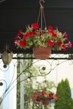 Δοχεία με τα κόκκινα λουλούδια Στοκ Φωτογραφίες