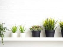 Δοχεία με τα succulents στον πίνακα στοκ φωτογραφίες