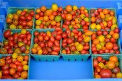 Δοχεία με τις ντομάτες Στοκ εικόνα με δικαίωμα ελεύθερης χρήσης