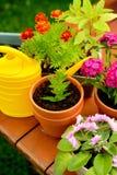 Δοχεία λουλουδιών και δοχείο ποτίσματος στον πράσινο κήπο Στοκ φωτογραφίες με δικαίωμα ελεύθερης χρήσης