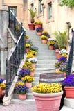 Δοχεία λουλουδιών που ευθυγραμμίζουν τα βήματα σκαλοπατιών Στοκ Φωτογραφία