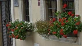 Δοχεία λουλουδιών στα παράθυρα απόθεμα βίντεο