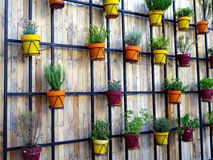 Δοχεία λουλουδιών στον ξύλινο τοίχο Στοκ εικόνες με δικαίωμα ελεύθερης χρήσης