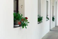 Δοχεία λουλουδιών των λουλουδιών στα παράθυρα Στοκ φωτογραφίες με δικαίωμα ελεύθερης χρήσης