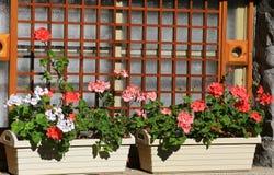 Δοχεία λουλουδιών Windowpane Στοκ εικόνες με δικαίωμα ελεύθερης χρήσης