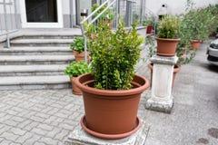 δοχεία πράσινων φυτών Υπαίθριος στο θερινό patio Μικρός townhouse αιώνιος θερινός κήπος Αυστρία Βιέννη Στοκ εικόνες με δικαίωμα ελεύθερης χρήσης
