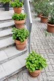 δοχεία πράσινων φυτών Υπαίθριος στο θερινό patio Μικρός townhouse αιώνιος θερινός κήπος Αυστρία Βιέννη Στοκ φωτογραφία με δικαίωμα ελεύθερης χρήσης