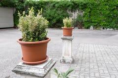 δοχεία πράσινων φυτών Υπαίθριος στο θερινό patio Μικρός townhouse αιώνιος θερινός κήπος Αυστρία Βιέννη Στοκ Φωτογραφία