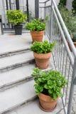 δοχεία πράσινων φυτών Υπαίθριος στο θερινό patio Μικρός townhouse αιώνιος θερινός κήπος Αυστρία Βιέννη Στοκ Φωτογραφίες