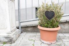δοχεία πράσινων φυτών Υπαίθριος στο θερινό patio Μικρός townhouse αιώνιος θερινός κήπος Ο πίνακας κιμωλίας στη μορφή Στοκ φωτογραφίες με δικαίωμα ελεύθερης χρήσης
