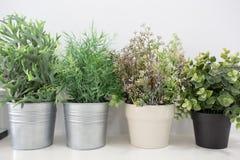 δοχεία πράσινων φυτών Στοκ φωτογραφία με δικαίωμα ελεύθερης χρήσης