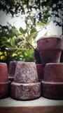 Δοχεία στον κήπο Στοκ Εικόνες