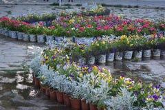 Δοχεία του σχεδίου λουλουδιών Στοκ Φωτογραφίες