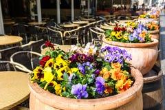 Δοχεία των λαμπρά ζωηρόχρωμων λουλουδιών σε μια σειρά κοντά στον καφέ Στοκ εικόνες με δικαίωμα ελεύθερης χρήσης