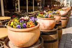 Δοχεία των λαμπρά ζωηρόχρωμων λουλουδιών σε μια σειρά κοντά στον καφέ Στοκ εικόνα με δικαίωμα ελεύθερης χρήσης