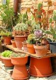 Δοχεία των succulents Στοκ Εικόνα