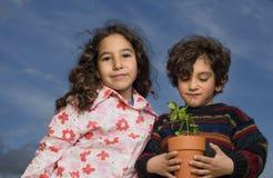 δοχείο δύο φυτών κατσικιώ στοκ εικόνα