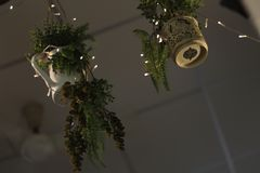 Δοχείο λαμπών φωτός και δέντρων και κισσών και λουλουδιών στοκ εικόνα