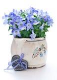 δοχείο λουλουδιών κουδουνιών Στοκ Εικόνες