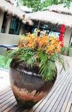 δοχείο λουλουδιών Στοκ Εικόνες