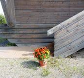 Δοχείο με marigolds Tagetes στο μέρος του ξύλινου σπιτιού Στοκ Φωτογραφίες