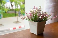 Δοχείο λουλουδιών από το παράθυρο Στοκ εικόνες με δικαίωμα ελεύθερης χρήσης