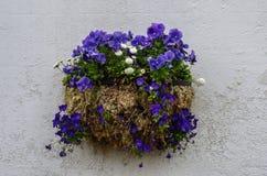 Δοχείο λουλουδιών με τα μπλε pansies και τις άσπρες μαργαρίτες Στοκ εικόνα με δικαίωμα ελεύθερης χρήσης