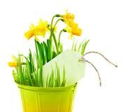 Δοχείο του λουλουδιού ναρκίσσων Στοκ Εικόνες