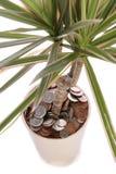 δοχείο φυτών χρημάτων εξαι& Στοκ Εικόνες