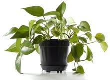 δοχείο φυτών Στοκ φωτογραφίες με δικαίωμα ελεύθερης χρήσης