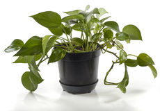 δοχείο φυτών Στοκ Φωτογραφίες
