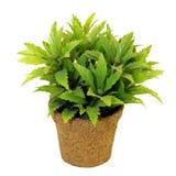 δοχείο φυτών Στοκ Εικόνα