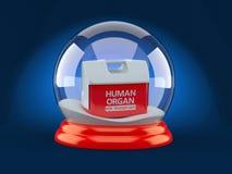 Δοχείο ψύξης για το ανθρώπινο όργανο μέσα στη σφαίρα γυαλιού Χριστουγέννων διανυσματική απεικόνιση