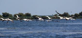Δούναβης του δέλτα Ρουμ&a Στοκ Εικόνα