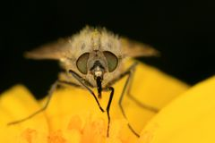 δράκος κίτρινος Στοκ φωτογραφία με δικαίωμα ελεύθερης χρήσης