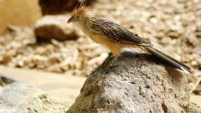 Δράκος πουλιών στοκ εικόνα με δικαίωμα ελεύθερης χρήσης