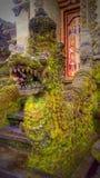 Δράκος του Μπαλί Στοκ Φωτογραφίες