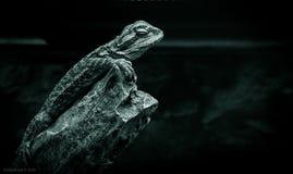 Δράκος Στοκ φωτογραφίες με δικαίωμα ελεύθερης χρήσης