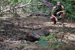 Δράκος Komodo, ο δεινόσαυρος διαβίωσης στη γη Στοκ Εικόνες