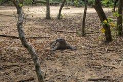 Δράκος Komodo σε ένα δάσος στοκ εικόνα με δικαίωμα ελεύθερης χρήσης