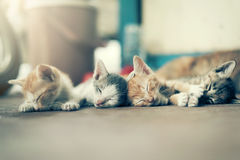 Δραματική ομάδα στιγμής Α διαφορετικού ύπνου γατακιών στο floo Στοκ εικόνα με δικαίωμα ελεύθερης χρήσης