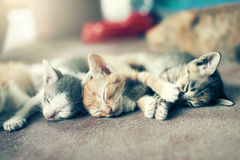 Δραματική ομάδα στιγμής Α διαφορετικού ύπνου γατακιών στο floo Στοκ φωτογραφίες με δικαίωμα ελεύθερης χρήσης