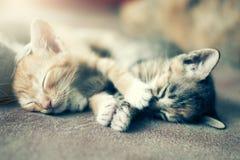 Δραματική ομάδα στιγμής Α διαφορετικού ύπνου γατακιών στο floo Στοκ Εικόνα