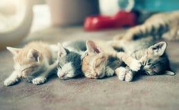 Δραματική ομάδα στιγμής Α διαφορετικού ύπνου γατακιών στο floo Στοκ Εικόνες