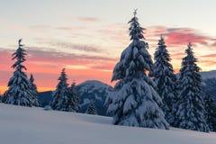 Δραματική χειμερινή σκηνή με τα χιονώδη δέντρα Στοκ Φωτογραφία